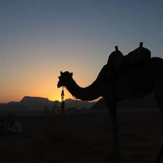Camel ride in search of sunrise.