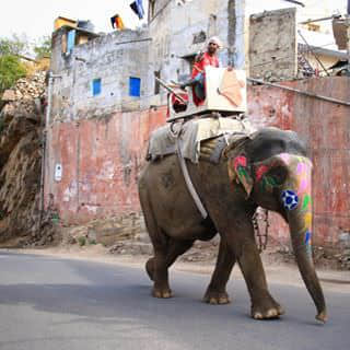 Elephants are always found on the street of the pink city. His owner seems doesn't like us. Lol